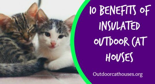 Outdoor_Cat_Houses_Benefits_Of_Insulated_Outdoor_Cat_Houses_logo