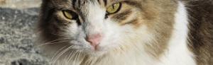 outdoor_cat_houses_stray_kitty