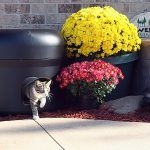 outdoor_cat_houses_the_kitty_tube_gen_3_outdoor_insulated_cat_house_with_custom_pet_pillow