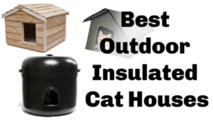 Outdoor_cat_houses_best_outdoor_insulated_cat_houses_thumbnail
