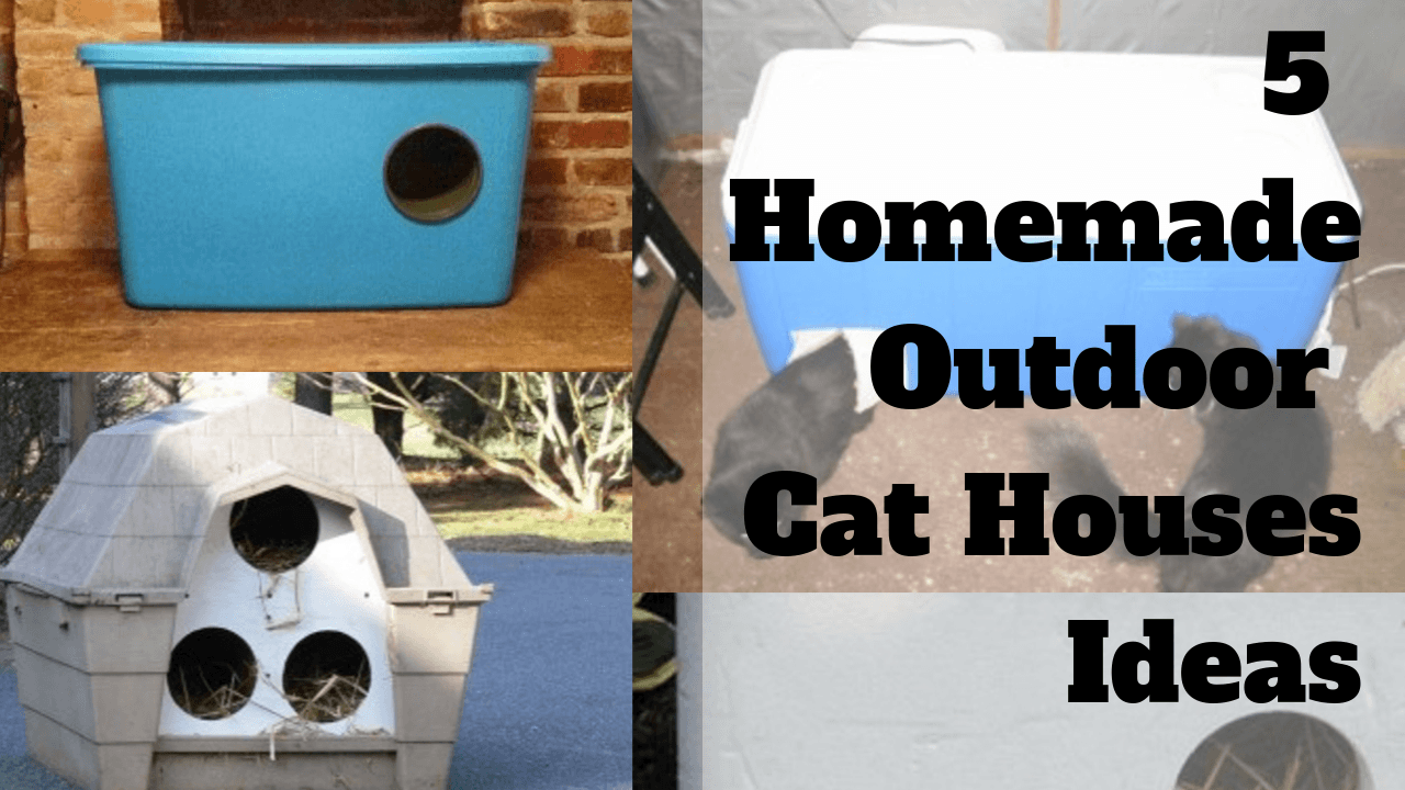 5 Homemade Outdoor Cat Houses Ideas You Can Make At Home