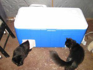 instructables_diy_winter_shelter_outdoor_cat_shelter