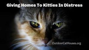 outdoor_cat_shelters_giving_homes_to_kitties_in_distress