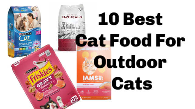 What's The Best Dry Cat Food For Outdoor Cats? (Read This First!)